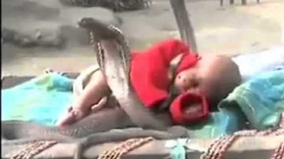 Bebeluşul păzit de patru şerpi cobra?! VIDEO