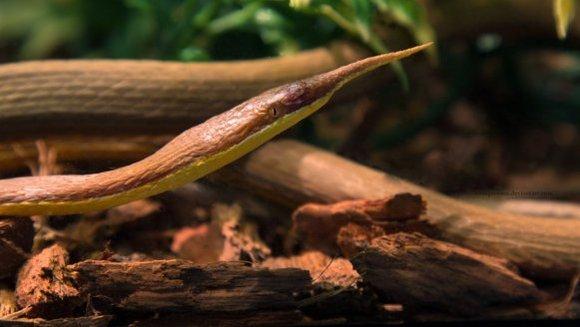 Cei mai ciudaţi şerpi din lume