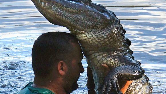 În paşi de dans alături de crocodilii sălbatici?