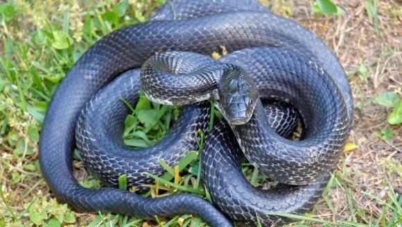 Client mușcat de cap de un șarpe