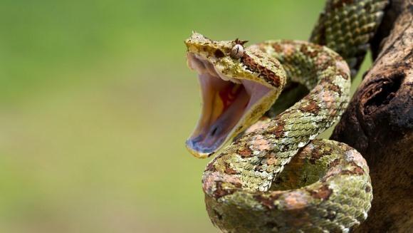 5 cazuri în care şerpii au regretat au regretat meniul pe care l-au ales