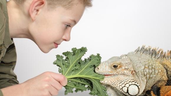 Se poate crea o legătură afectivă între om și reptilă? Ce spun specialiștii
