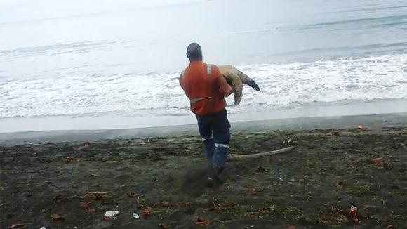 Cumpără broaşte ţestoase de la market şi le eliberează în mare