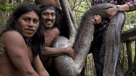 Cum arată cel mai mare şarpe din lume, descoperit în Jungla Amazonului