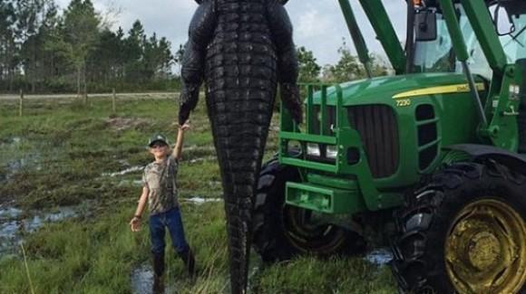 """Un crocodil uriaș a fost împușcat în Florida. """"Era un monstru ce trebuia înlăturat"""" (Foto)"""