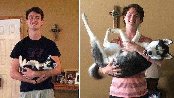 Înainte şi după: când căţeluşii devin adevăraţi căţei (Galerie Foto)