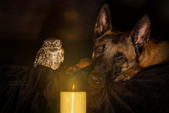 Prietenia neobișnuită dintre un câine și o bufniță (Galerie Foto)