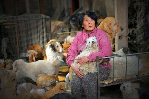 Cum a salvat de la moarte 100 de câini ce trebuia să fie mâncați la un festival din China (Galerie Foto)