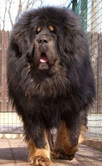 15 câini atât de mari, încât nu îţi va veni să crezi că sunt reali (Galerie Foto)