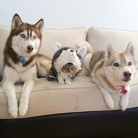 3 câini din rasa husky au devenit cei mai buni prieteni cu o pisică, după ce aceasta a fost salvată de la moarte (Galerie Foto)