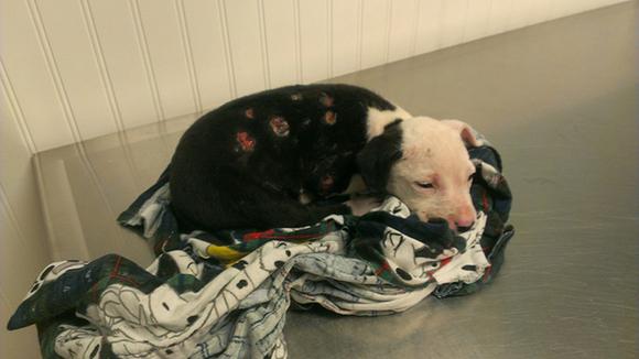 Un căţel salvat dintr-un incendiu a devenit pompier (Galerie Foto)
