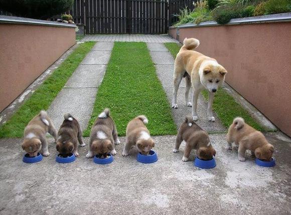 Mămici cu pitici: cele mai mândre mămici canine, alături de puii lor blănoși (Galerie foto)
