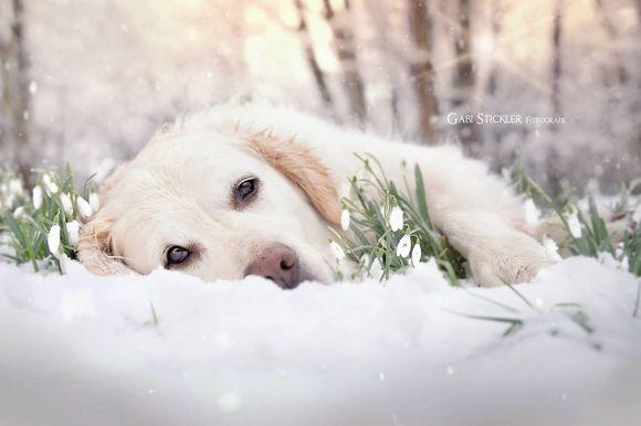 Câini bucurându-se de primăvară - (Galerie Foto) superbă