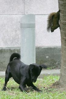 Este de necrezut ce a făcut această veveriță, când a văzut că puiul ei este atacat de un câine (Galerie Foto)