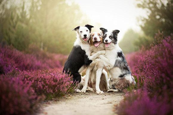Fotografii fascinante cu patrupezi canini. Cine este autoarea (Galerie Foto)