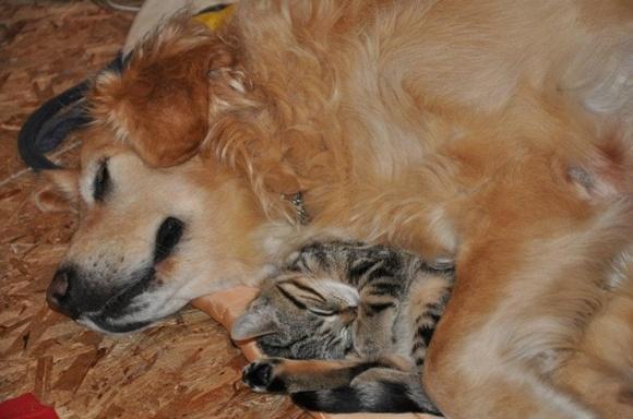 20 de fotografii care ne arată cât de adorabilă poate fi prietenia dintre câini și pisici (Galerie Foto)