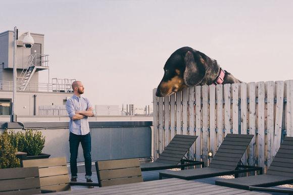 Vivian, câinele care cucerește America (Galerie Foto)