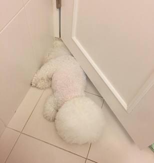 Câinele care arată ca o minge de bumbac. Nu te mai saturi privindu-l (Galerie Foto)