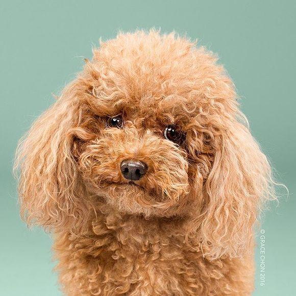 Fotografii cu patrupezi canini înainte și după ce și-au făcut frizura (Galerie Foto)