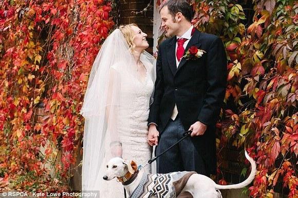 Impresionant: cel mai slab câine din lume cântărea doar 3 kilograme. După un an s-a recuperat şi îşi conduce părinţii la altar (Galerie foto)