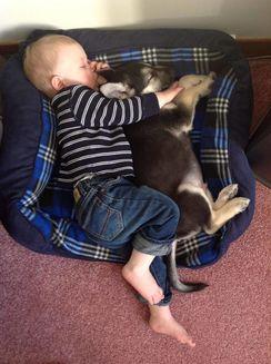 Înduioşător! Imagini care dovedesc că un câine este mai bun decât o pernă – (Galerie foto)