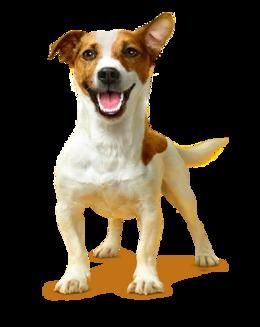 Știai că....  4 din 5 câini cu vârsta de peste 3 ani suferă de afecțiuni ale dinților și gingiilor cauzate de depunerile de placă și tartru? - (Galerie foto)