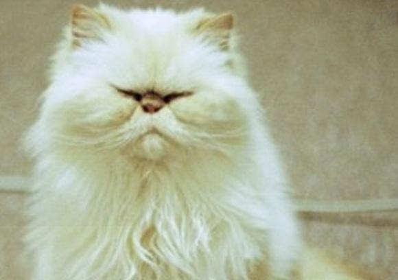 Cele mai frumoase pisici... mustăcioase (Galerie Foto)