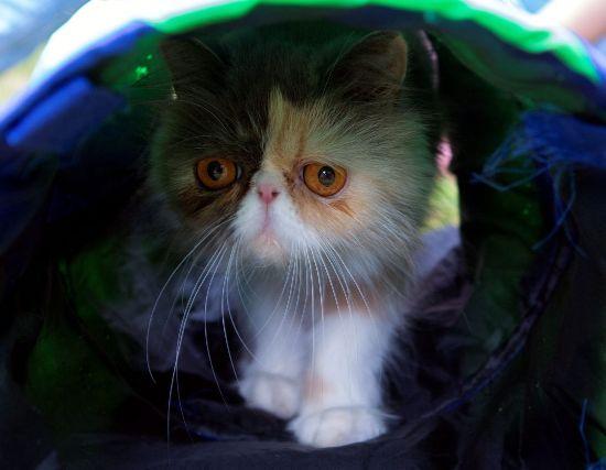Felina care a surclasat-o pe Grumpy Cat? (Galerie Foto)