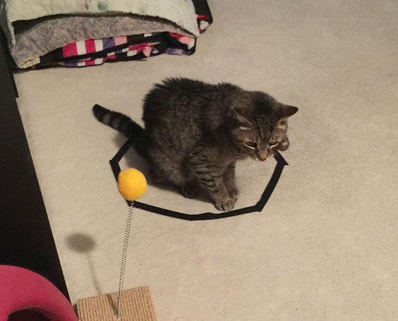 Cum să faci pisica să stea locului! E foarte simplu! (Galerie Foto)