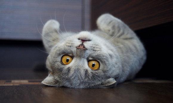 Grumpy cat, detronată! Melissa, felina care seamănă cu Einstein, este noua vedetă (Galerie foto)