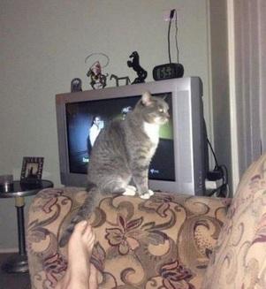 """Ooops! Pisici care nu stau foarte bine la capitolul """"logică"""" (Galerie Foto)"""