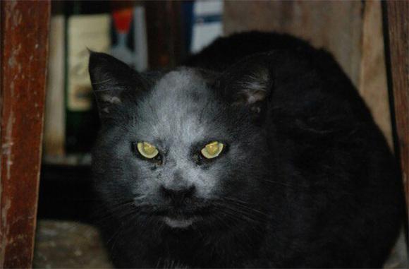Pisicuță comparată cu un diavol, după ce a căzut cu capul în făină (Galerie Foto)
