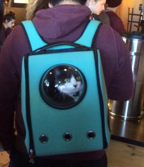Ghiozdanele care parcă le trimit pe pisici în spaţiu (Galerie Foto)