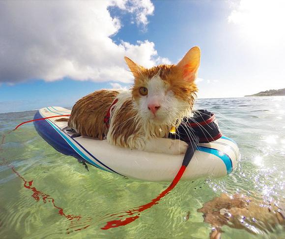 Povestea emoţionantă a pisicuţei cu un singur ochi, care iubeşte să înoate în Hawaii – (Galerie Foto)