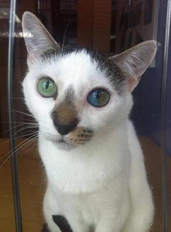 Pisica aceasta ascunde un întreg univers în ochii ei (Galerie Foto)