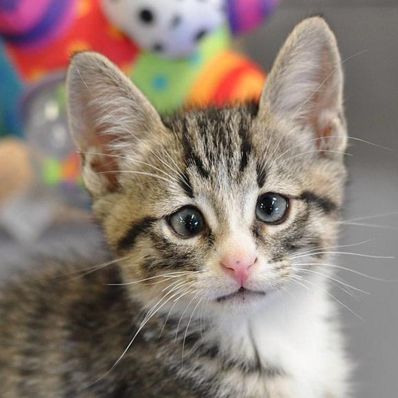 Faceţi cunoştinţă cu Bum, pisicuţa permanent îngrijorată, celebră acum în toată lumea (Galerie Foto)