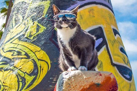 O pisică, obligată să poarte permanent ochelari de soare. Care este motivul (Galerie Foto)
