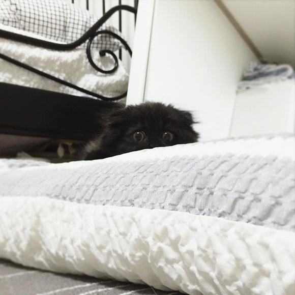 Faceţi cunoştinţă cu Gimo, pisicuţa cu cei mai mari ochi din lume (Galerie Foto)