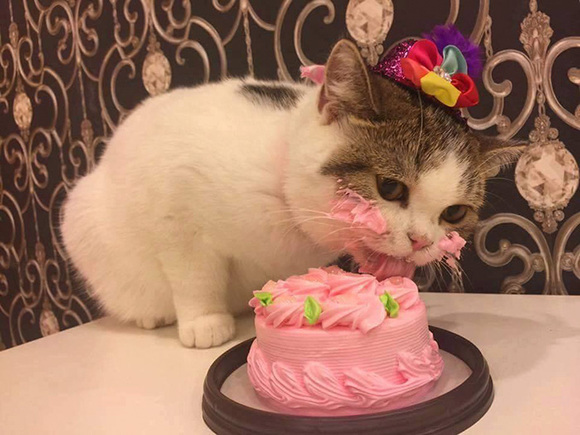 Adorabil: o pisicuță își savurează tortul aniversar cu toate... mustățile (Galerie foto)