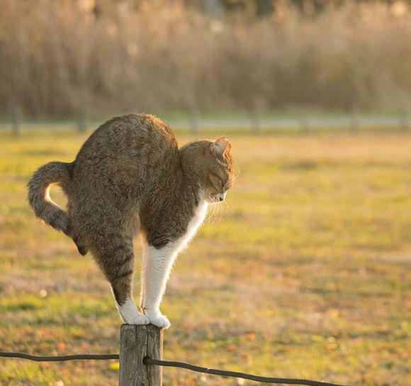 Cele mai amuzante grimase ale pisicilor tokiote, într-o serie memorabilă de fotografii (Galerie Foto)