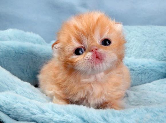 Top 20: cele mai adorabile pisicuțe dintotdeauna (Galerie Foto)