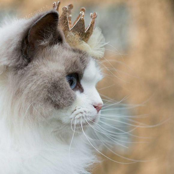 Faceţi cunoştinţă cu Aurora, prinţesa pufoasă care a cucerit internetul (Galerie Foto)