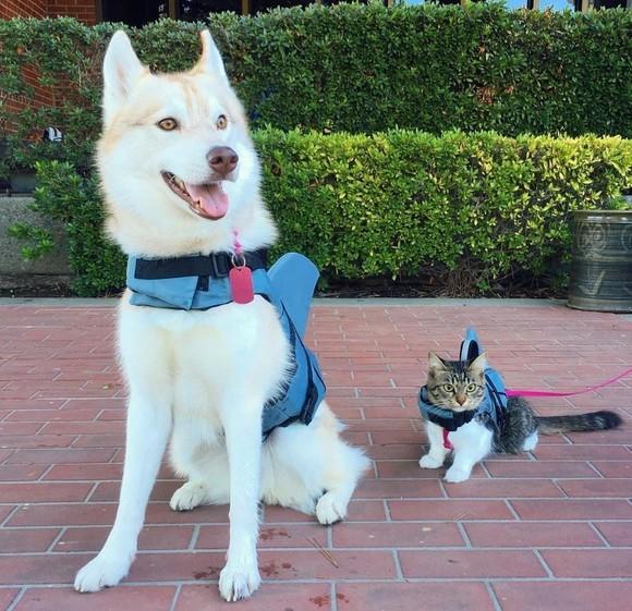 Un câine i-a salvat viaţa unei pisicuţe care nu voia să mai trăiască. Cum s-a întâmplat