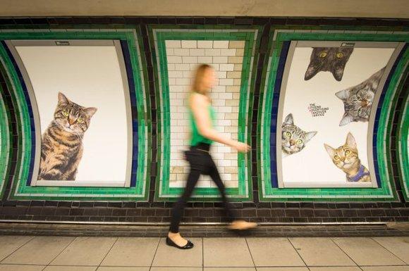 Într-o staţie de metrou din Londra, reclamele au fost înlocuite cu poze cu… pisici (Galerie foto)