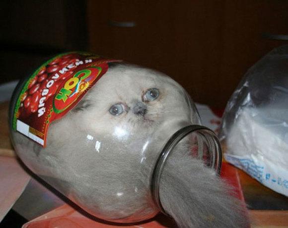 Dovezi imbatabile că pisicile sunt, de fapt, lichide (Galerie foto)
