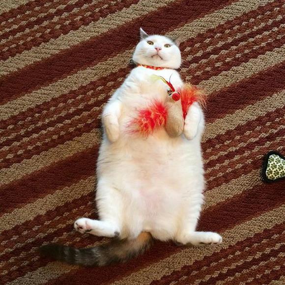 Pisica aceasta habar nu are cum reuşeşte să le înnebunească pe găini (Galerie foto)