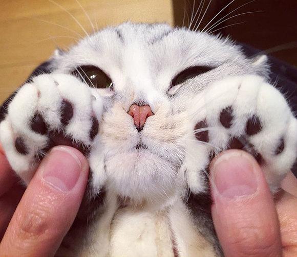 Hana, pisicuţa japoneză care are ochii cât cepele. A cucerit internetul (Galerie foto)