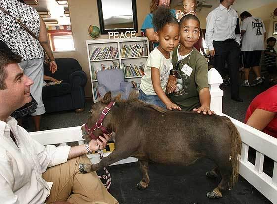 Cartea recordurilor: cum arată cel mai mic cal din lume (Galerie Foto)