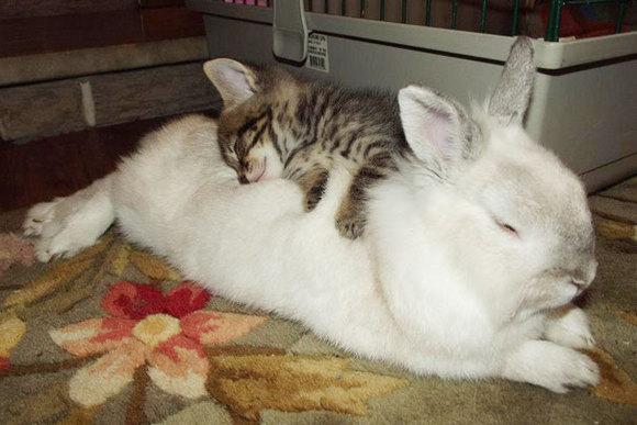Animăluțele somnoroase și prietenii lor neobișnuiți. Imagini care ne topesc inima (Galerie Foto)
