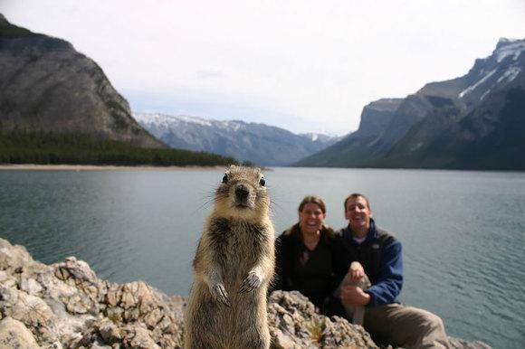 Top 10 cele mai amuzante fotografii cu animale, dintotdeauna (Galerie Foto)